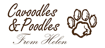 Cavoodles & Poodles From Helen